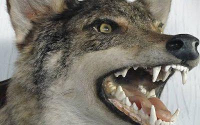 La leyenda de la calle del Lobo